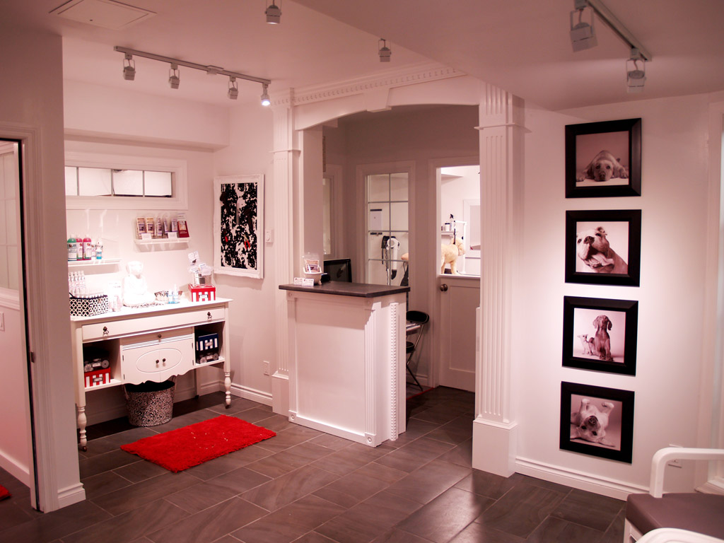 Dog Grooming Salon Decorating Ideas